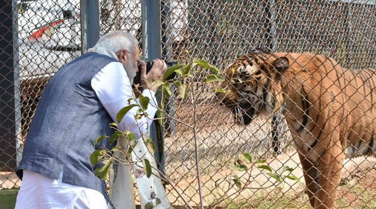 Narendra Modi news, Modi Chhattisgarh, Modi jungle safari, Modi naya raipur, Modi news, Naya Raipur, Chhattisgarh Modi, Modi visits Chattisgarh, Chattisgarh-Nandanvan Zoo, Modi-jungle safari, Modi-tiger