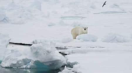Arctic archipelago of Svalbard, svalbard temperature, freezing temperature in svalbard, world news, latest news
