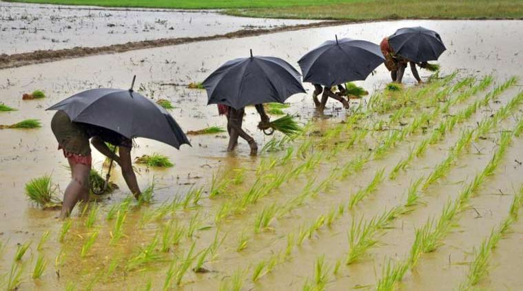 West Bengal government, West Bengal agricultural sector, West Bengal paddy cultivators, demonetisation, paddy cultivators problems, indian express news