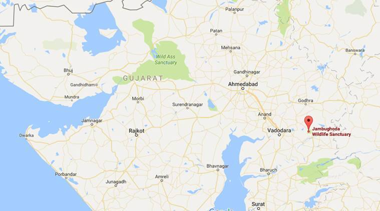 Gujarat forest department, eco-resorts, Jambughoda Wildlife Sanctuary, Panchmahal, online booking, online booking service, online resort booking, india news, indian express