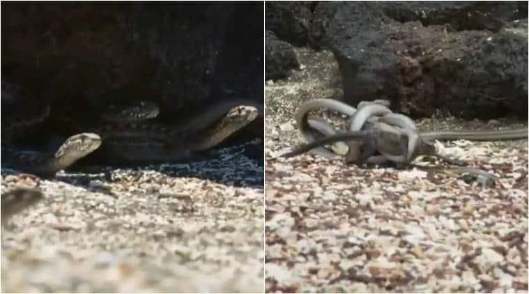 snake-lizard-main_759