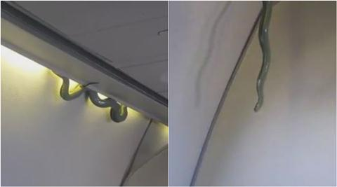 snake, snake on plane, snake on flight, snake on mexico flight, snake on airplane, snake on plane video, viral video, viral animal videos, trending video, viral news, trending news, mexico news, latest news