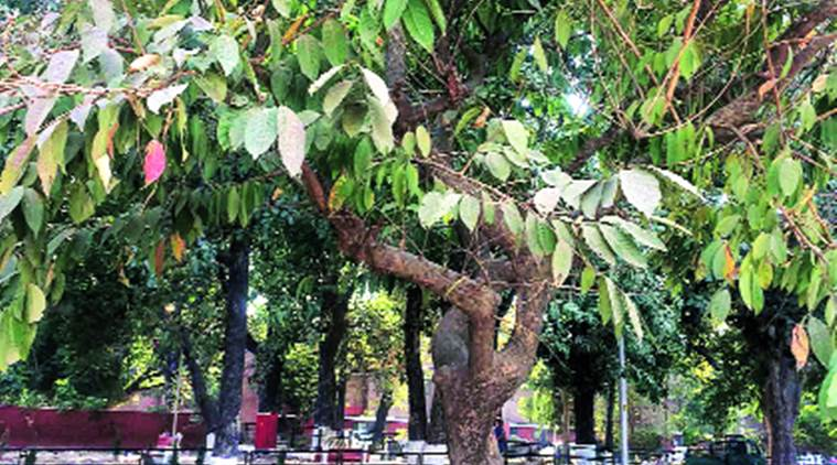 The Harad tree's materials have to be used and administered in a specific way as advised by a specialist. Express