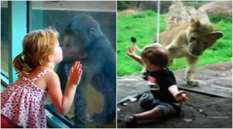 trending youtube video, cute kid videos, cute baby videos, cute animals with kids videos, animals with kids, kids in zoo videos, viral, trending globally, viral videos, indian express, indian express news, indian express trending