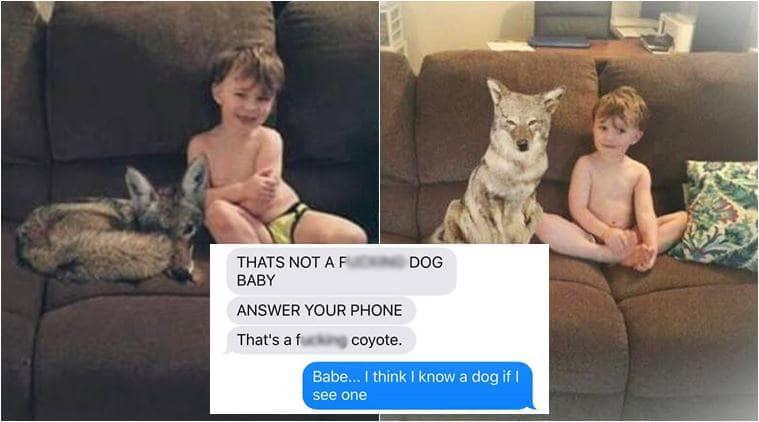 coyote-tweet_759_kayla-eby-facebook