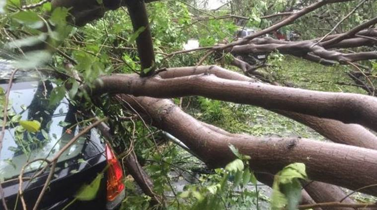 cyclone, cyclone vardah, chennai, andhra pradesh, landfall, storm , cyclonic storm , cyclone vardha, cyclone in tamil nadu, cycolne in coastal areas, india news, latest news