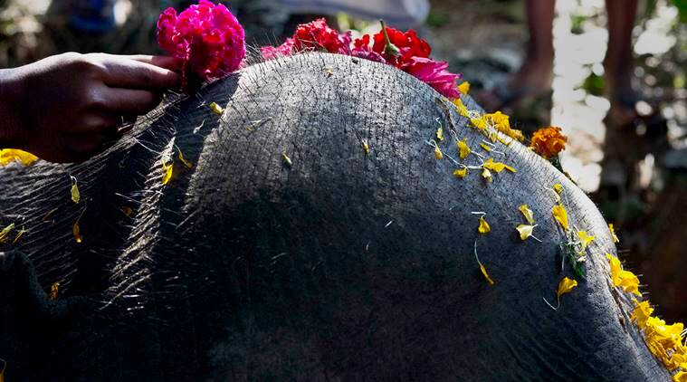 A villager places a flower on the head of a dead elephant that was among three wild elephants that got killed after being hit by a speeding train at Potiyapam village east of Gauhati, Assam state, India, Saturday, Dec. 17, 2016. (AP Photo/Anupam Nath)