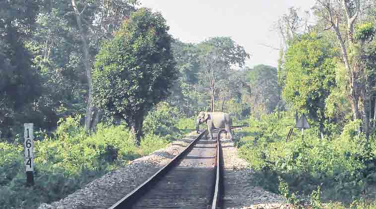assam, trains runs over elephant, trin crushes 5 elephants, indian railways, sonitpur district, elephant habitat, northeast, wildlife encroachment, assam news, indian express