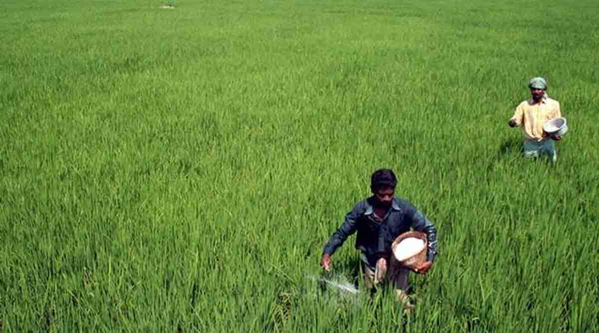 Watch out for these four crops! | India News,The Indian Express