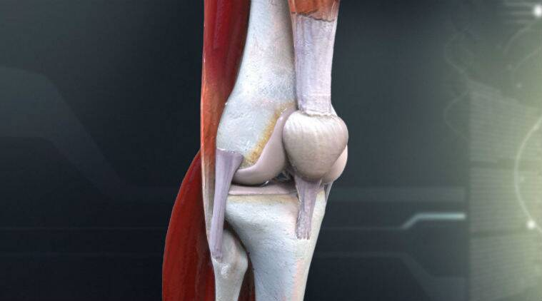 Interactive 3D models of human joints created by Oxford scientists ...