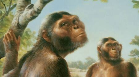 Human ancestors, lucy, lucy climbed trees, hominim fossilised skeleton, national museum of ethiopia, erect walking human ancestor, anthropologist, science, science news