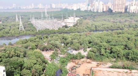 Bombay High Court orders total freeze on mangrove destruction