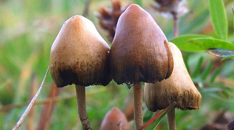 'Magic mushroom' psychedelic may ease anxiety, depression