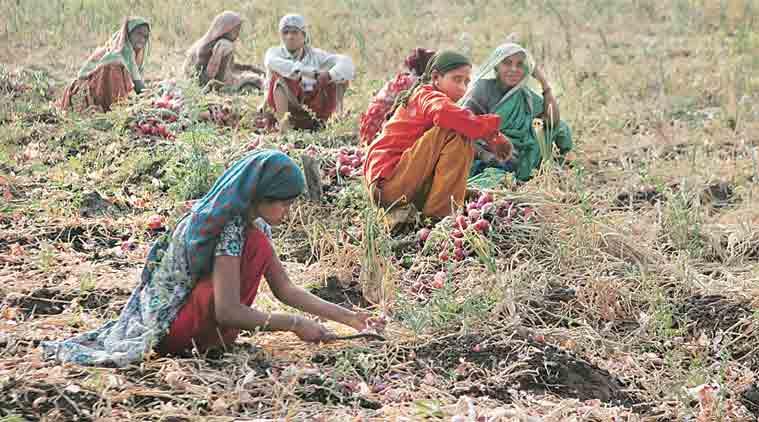 Deficient Monsoon: 'Amreli kharif yield may drop by 30%'
