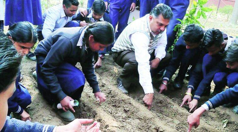Governement Model Senior Secondary School, organic gardening, organic gardening in Chandigarh schools, Chandigarh schools organic gardening, organic gardening voluntary teaching, Chandigarh schools, Chandigarh, regional news, Indian Express