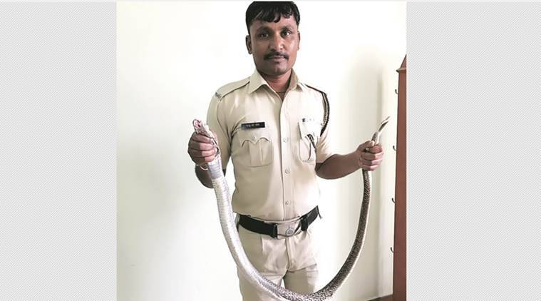 snake catcher, prison guard snake catcher, prison guard catches snakes, maharashtra guard catches snake, taloja guard snake catchers, india news