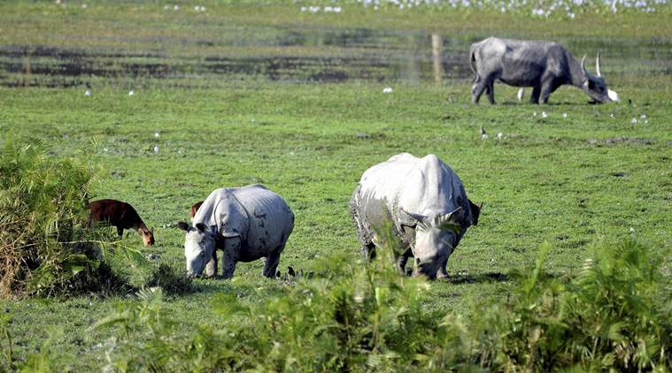 Kaziranga National Park, fine for overspeeding in Kaziranga national park, kaziranga animal deaths, kaziranga road kills, road kills in kaziranga, indian express, india news