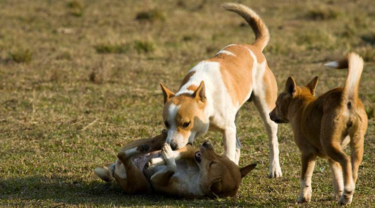 To deal with strays, Chandigarh seeks 'dog management' tips