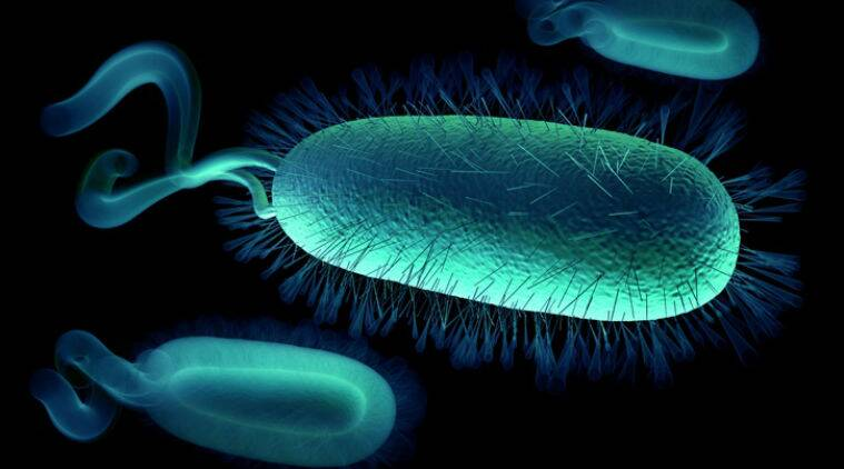 Worlds first stable semi-synthetic organism created | The