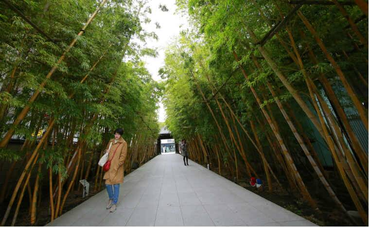 Bamboo, healing properties of bamboo, anti bacterial properties, wound healing properties, bambooo leaves, tissue repair, Science, Science news