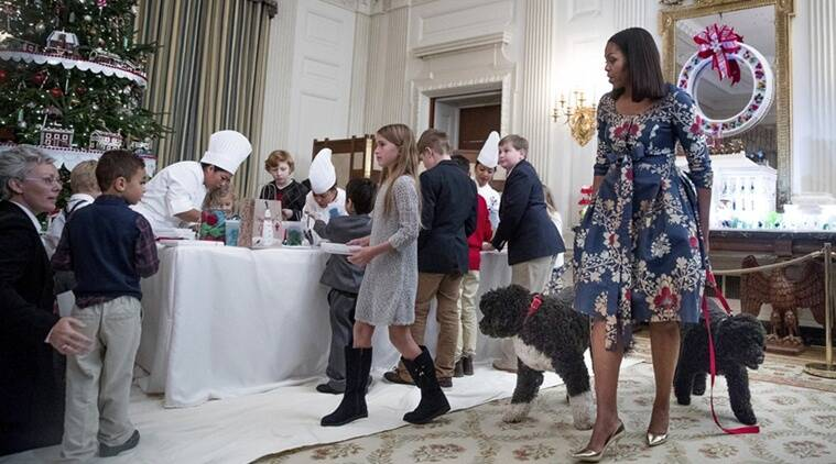 First Dog, obamafamily First Dog, obama family dogs, First Dog bo, obama's dog bite guest, bo bites a girl, first dog bo bites white house guest, latest news