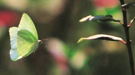 Butterfly park to be set up inGurgaon