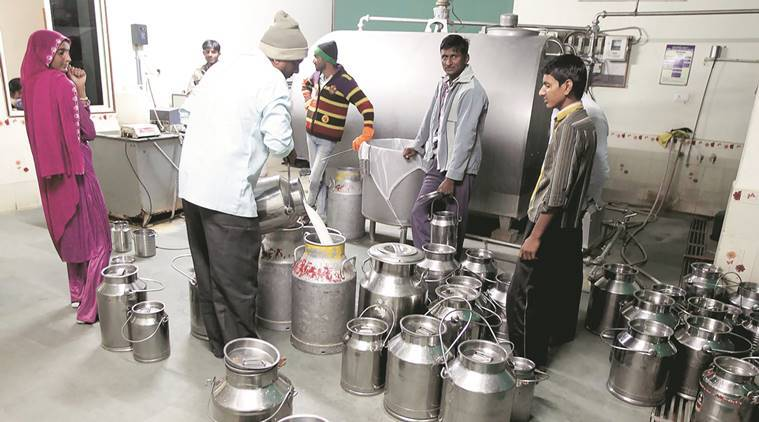 Maharashtra's dairies, milk, milk prices, maharashtra milk prices, government of india, demonetisation, demonetisation effects, milk trading, cattle trading, cattle trading demonetisation, notebandim cow vigilanting, gau rakshaks, cow milk, buffallow milk, milk production, milk supply chain, inflation, narendra modi, Pm modi demonetisation, agriculture, farmers trading, farmers demonetisation, farmers cash crunch, india news, indian express news