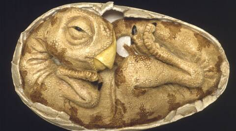 Dinosaur eggs hatched slowly like reptiles, not birds: Study | Technology  News,The Indian Express