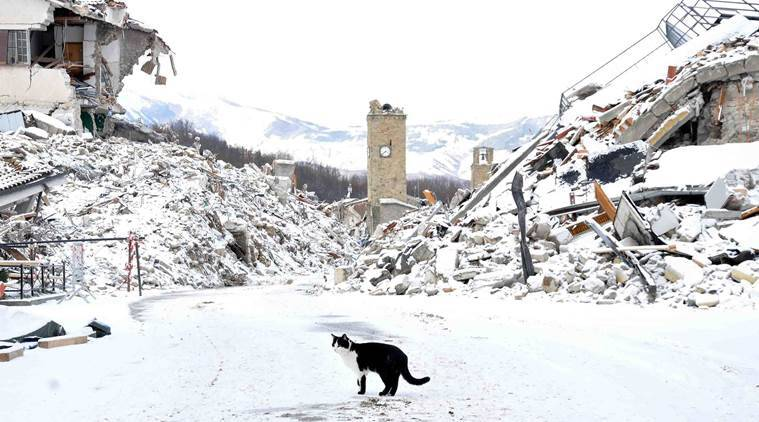 A cat wanders amid rubbles in the quake-hit town of Amatrice, central Italy, covered by a white blanket of snow, Thursday, January 5, 2017. An August 24 earthquake killed almost 300 people last year in central Italy and was followed by further devastating shakes in October. (Emiliano Grillotti/ANSA via AP)