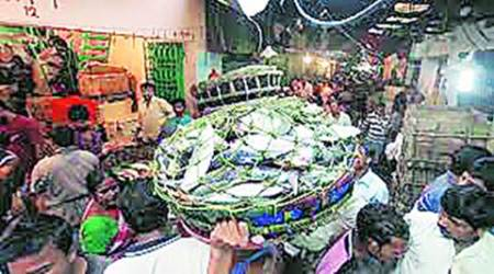 West Bengal: Its numbers dwindling, Hilsa may get legal protection