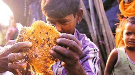 Mumbai: For honey collectors, the going gets tough in thecity