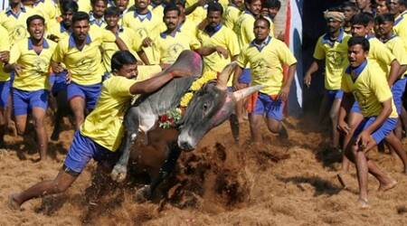 No stay on Jallikattu act, but SC raps Tamil Nadu govt for protests against ban