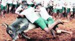 TN Governor promulgates ordinance to conduct Jallikattu, CM Panneerselvam to inaugurate sport on Sunday