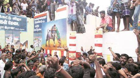Jallikattu: Gored by bulls, 2 die in Pudukottai; protesters block CM's way near Madurai