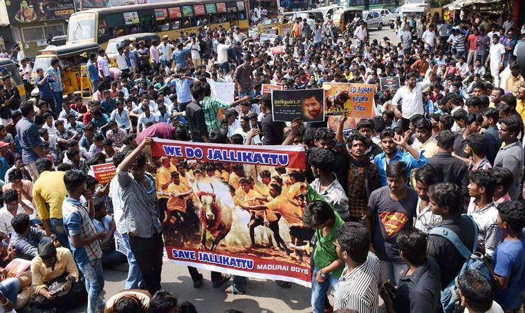 Image result for Jallikattu protest in Tamilnadu