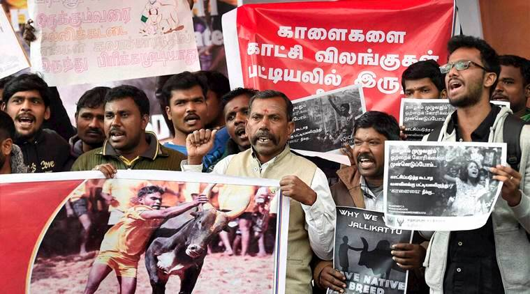 New Delhi: Delhi Tamil Students & Youngsters shout slogan during a protest against People for the Ethical Treatment of Animals (PETA) and the ban on Jallikattu in New Delhi on Thursday.PTI Photo by Kamal Singh(PTI1_19_2017_000160b)