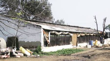 Pataudi rampage: Accused robbed another man before hitting poultry farm