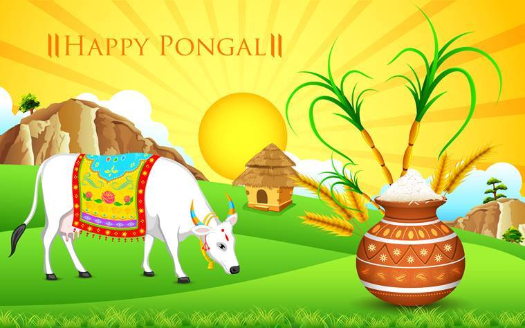 pongal 2018, pongal 2018 wishes, pongal wishes, pongal whatsapp messages, pongal images, pongal greetings, happy pongal messages, happy pongal images, happy pongal photos