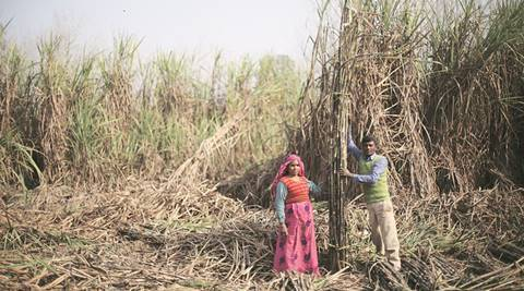 Maharashtra State Co-op Sugar Factories Federation opposes import  of raw sugar
