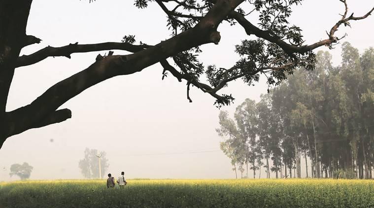 bumper harvest, monsoon bumper harvest, union agriculture ministry, kharif crop, indian express, business
