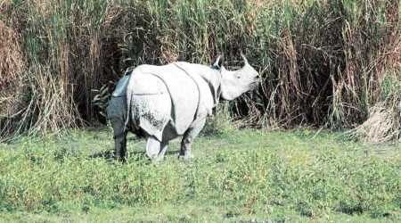 Carcass of adult rhino found in Kaziranga National Park