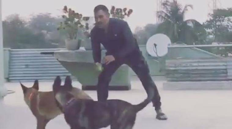ms dhoni, dhoni, ms dhoni pets, ms dhoni video, ms dhoni dogs, mahendra singh dhoni, dhoni playing with dogs, ms dhoni instagram, ms dhoni india captain, ms dhoni indian odi captain, ms dhoni t20 captain, cricket news, cricket