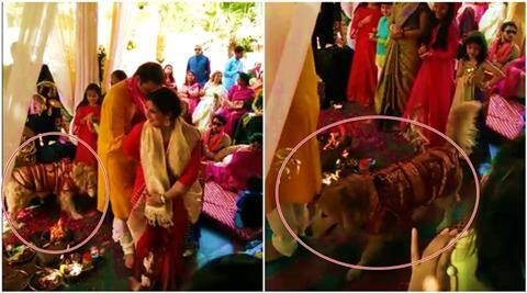 dog taking pheras, dog behind indian couple, dog takes pheras with bride and groom, pet dog at wedding, dog videos, dog funny videos, dog wedding videos, indian express, indian express news