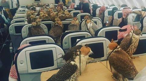 saudi arabia falcons on plane, saudi arabia falcons plane, saudi arabia prince falcons, saudi arabia uae wild animals as pets, uae wild animals for pets, indian express, indian express news, trending news, trending globally, bizarre