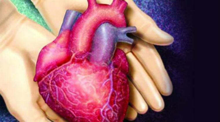 functional 'beating' human heart muscle created | the indian express, Muscles