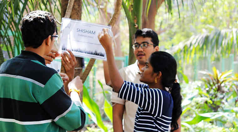 iit bombay, iit, iit bombay trees, iit powai, iit trees, green initiative, education news