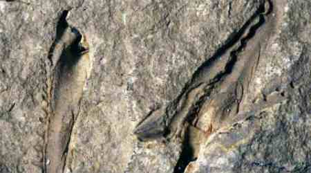 primordial giant worm, snapping jaws worm, 400 million year old monster worm, carnivorous worm, Palaezoic era, Science, Science news