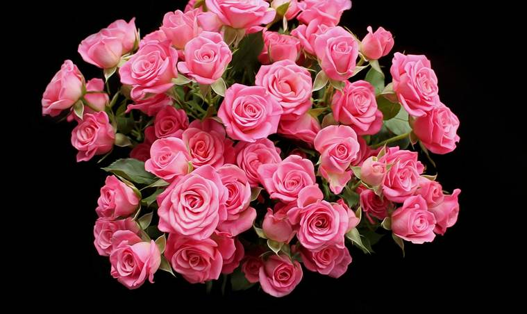 Choose baby pink roses to express admiration (Source: Pixabay)