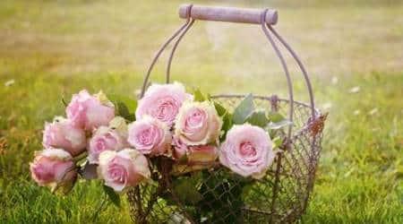 roses-480