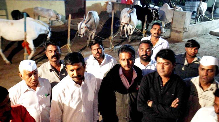 Agitated bull rearers in Narayangaon